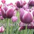Naturfarben von Natural: Jetzt mit Frühlingsrabatt kaufen