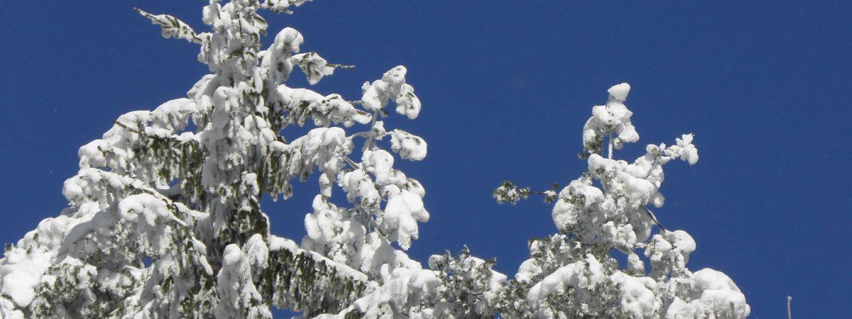 Ölhaltige Naturfarben können bei leichtem Frost versendet werden