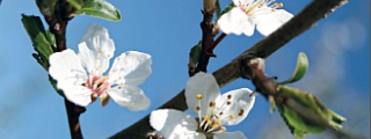 gruenvoll - das Magazin für nachhaltigen Konsum